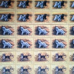Hungarian Dogs - Stamps
