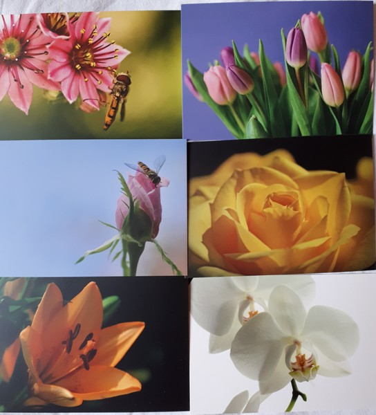 Flower postcards pack01