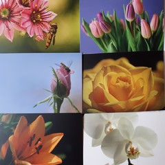 6 pcs Postcard Bundle - Flowers