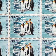 Penguins - Hungarian Stamp