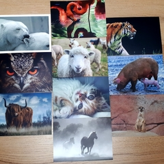 Animals - 10 pcs Postcards Bundle