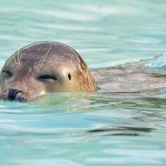 Seal - Postcard