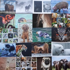 Animals - 20 pcs Postcards Bundle