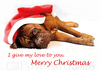 Dog christmas postcard cm112w 01