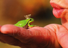 Frog king tale ft101w 01