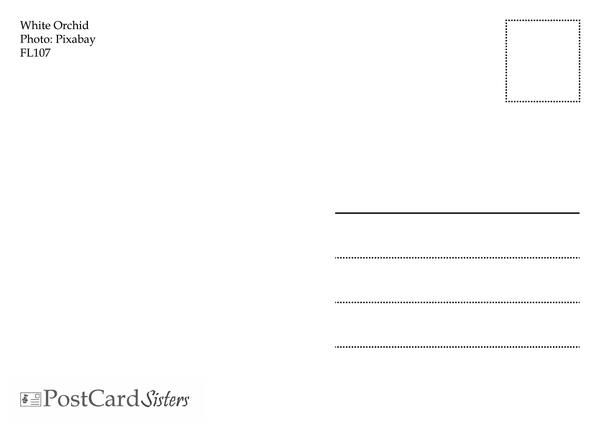 Orchid postcard fl107 02