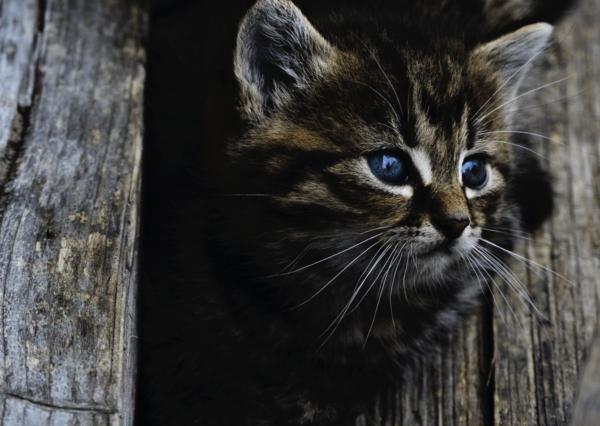 Cute cat postcard an116 01c