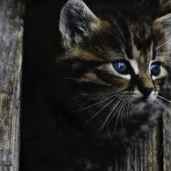 Gestreifte Katze Postkarte