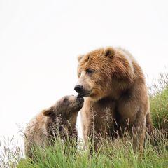 Barna medve képeslap