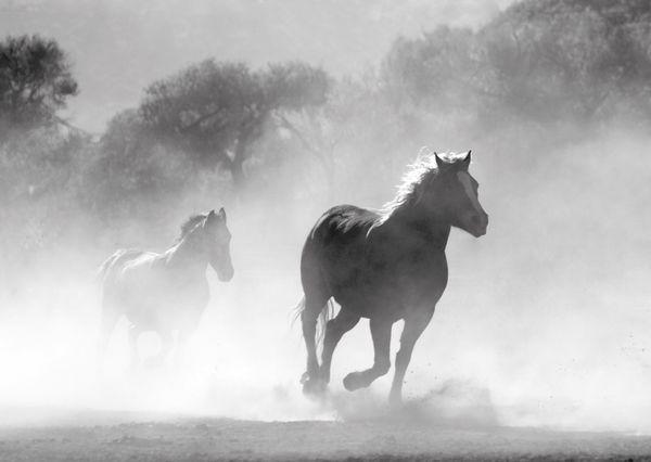 Horses postcard an108 01c