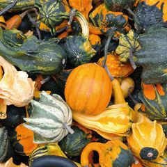 Gourds Postcard