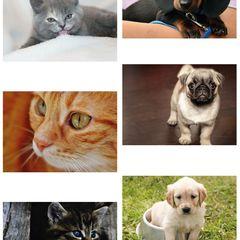6 Stück Postkarten-Paket - Katzen und Hunde