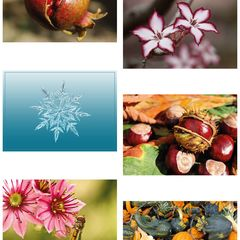 6 pcs Postcard Bundle - Nature
