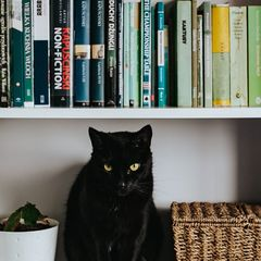 Black Cat on a White Bookshelf - Postcard
