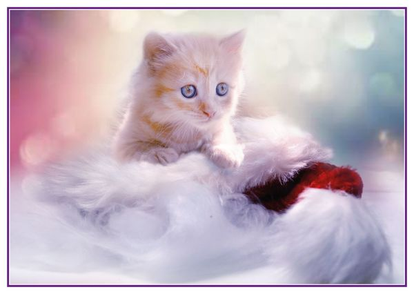 Christmas kitty postcard cm119c