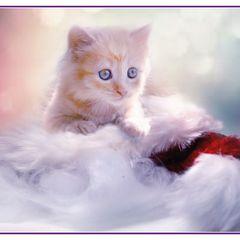 """""""Weihnachts-Kätzchen"""" Postkarte"""