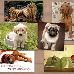 Dogs - 6 pcs Postcards Bundle