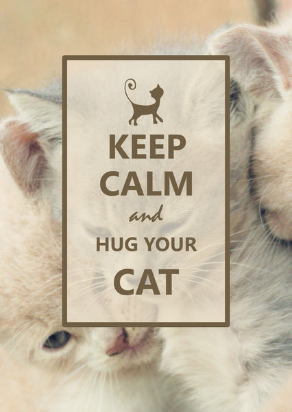 Hug your cat postcard ke113c