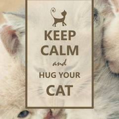 """Keep Calm and Hug Your Cat"" Képeslap"
