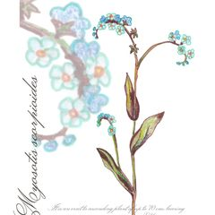 Forget-Me-Not - Postcard