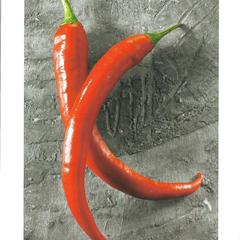 Chili - Absolute Hungary Postcard