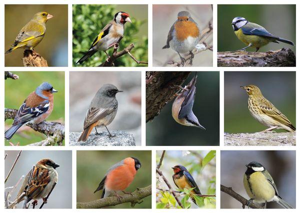 Birds multipic postcard an133c