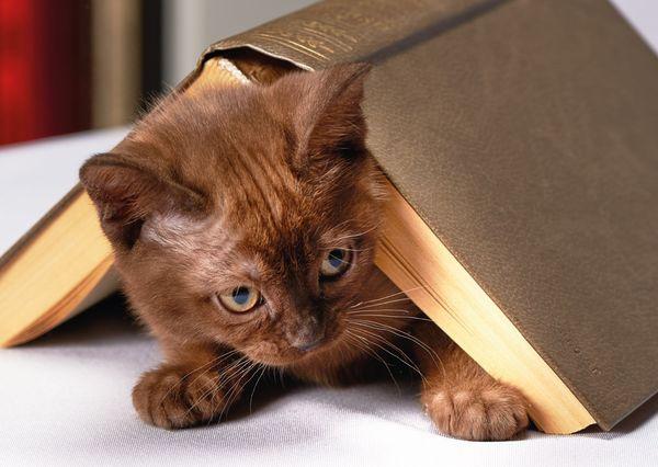 Book cat postcard an135c