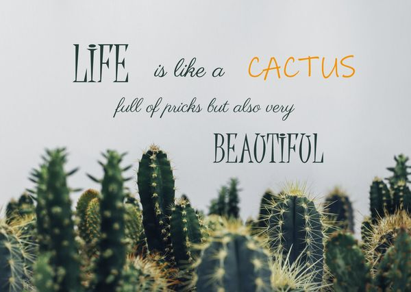 Cactus quote postcard mt111c